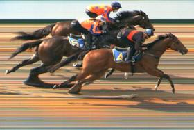 Big Hearted (No. 4) coming from last to win the second trial on Tuesday.