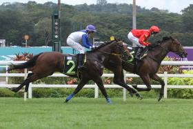 Red Ocean lines up for his hat-trick