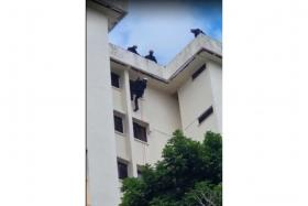 Police officers managed to gain entry into the unit in Ang Mo Kio and apprehend the 39-year-old woman.