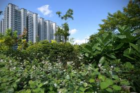 Singaporeans prioritise nature spaces, affordable housing: Poll