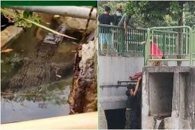 Crocodile spotted at East Coast Park caught, relocated to Sungei Buloh