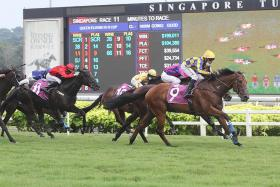 Hard Too Think completes S'pore Derby-QEII Cup double