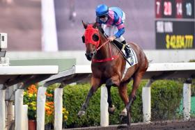 Hongkong Great  is a three-time  course-anddistance winner  and looks hard to  catch in Race 2 at  Sha Tin today.