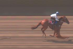 Gariza beating Power Warrior by 3-lengths in Tuesday's Trial 3.