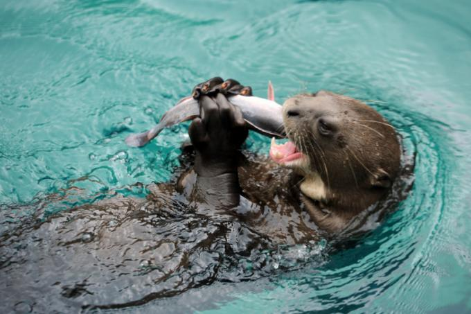 Otters cause chaos for Sentosa koi owners, Latest