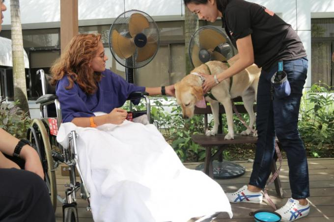 Dogs give patients four-legged feel-good factor
