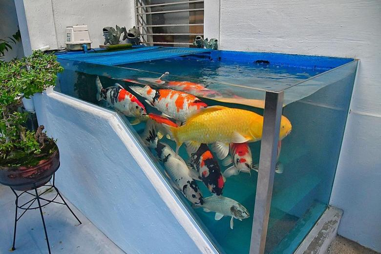 HDB rejects owner's appeal to keep unusual koi pond